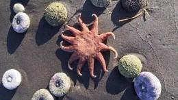 СКР назвал приоритетную версию пофакту гибели морских животных наКамчатке