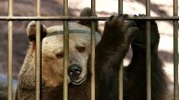 Видео момента нападения медведя наработницу питомника вКурской области