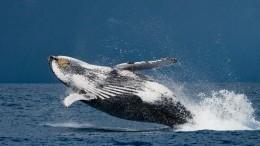 Охотящийся кит чуть непроглотил двух туристок накаяке— видео