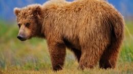 Дерзкий медведь напал начастный дом вХМАО— видео