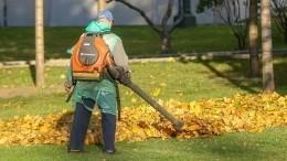 Утренний кошмар: Почему уборщики листьев мешают петербуржцам?