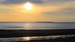 Останки неизвестного существа выбросило наберег Финского залива— ктоэто?