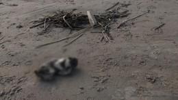 «Неизвестное существо» наберегу Финского залива оказалось телом младенца