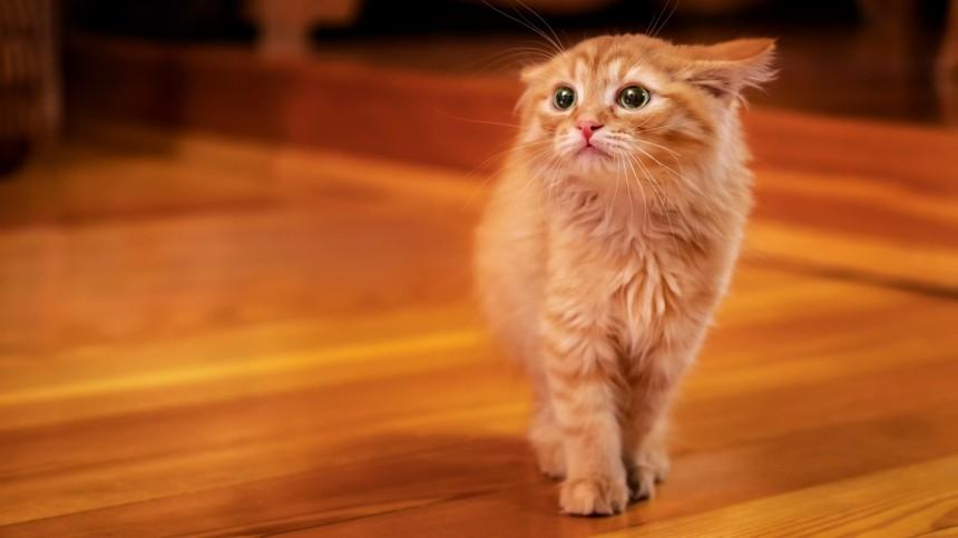 Чего больше всего боятся кошки? Рассказывает специалист-фелинолог