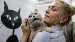 Всети появилось приложение для перевода кошачьего языка