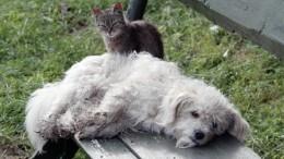 Приют под Иркутском обвинили вубийстве 50 тысяч кошек исобак