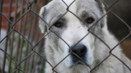 «Отдайте собаку!»— вЛенобласти зоозащитников обвинили вкраже животных