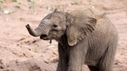 Видео чудесного спасения слоненка, провалившегося вловушку вИндии