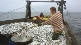 «Задлинным рублем»: безработные латвийские рыбаки променяли Евросоюз наРФ