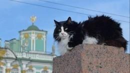 Эрмитажные коты получат наследство отгражданина Франции