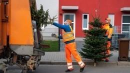 Когда выбрасывать новогоднюю елку?
