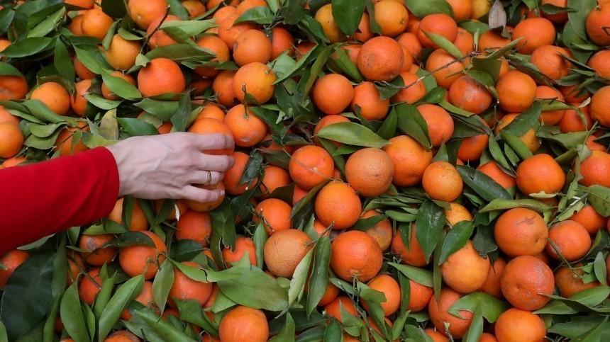 Новогодняя диета: врач рассказал, как есть мандарины, чтобы похудеть