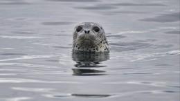 Видео: Около 20 мертвых тюленей нашли напобережье Каспийского моря