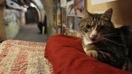Евроремонт вЭрмитаже или как меценат изФранции оставил наследство петербургским котам