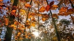 Самая теплая осень завсю историю метеонаблюдений: чем еще удивит 2020 год