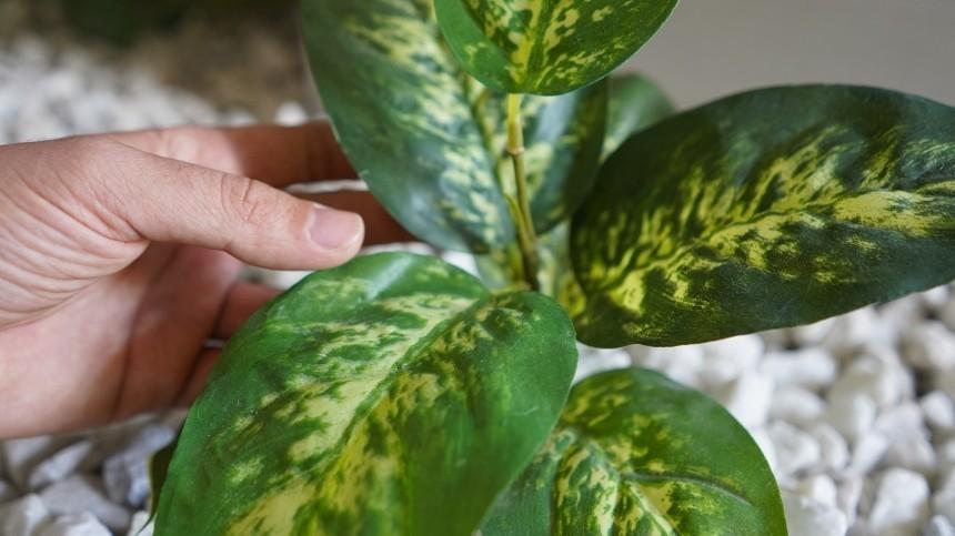 «Ботанический ад»: Малышева назвала комнатные растения, опасные для человека