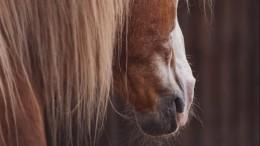 Видео приставаний петербуржца клошади, откусившей ему нос