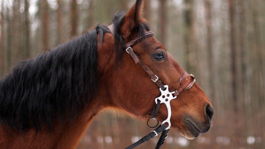 Фото петербуржца, которому лошадь откусила кончик носа (18+)