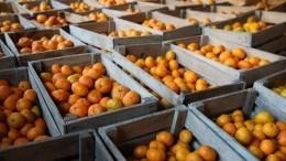 Занятой бизнесмен расплатился схудожником закартину тонной мандаринов