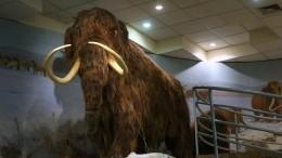 Останки древних животных приравняют кполезным ископаемым