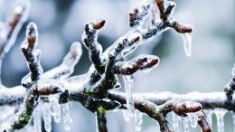 НеCOVID, так снегопад: власти просят жителей Центральной части России сидеть дома