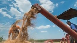 Уроссийской пшеницы возникли сложности споставками заграницу