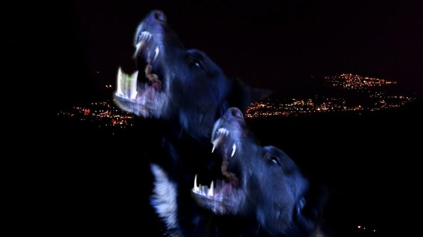 ВКоми бродячие псы загрызли женщину— шокирующие кадры18+