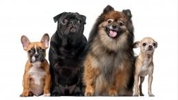 ТОП-10 самых популярных пород собак вРоссии в2020 году