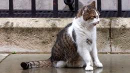 Когда довсего Brexit: кот Бориса Джонсона устроил охоту наголубя