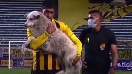 Футболист Рауль Кастро приютил чуть несорвавшего матч бездомного щенка