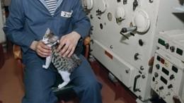 Настоящий морской волк: кошка покличке Собака 10 лет живет навоенном корабле