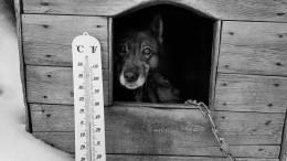 Стая волков растерзала нескольких собак инапала налошадь вЕАО— видео