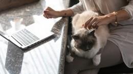 Психологи оценили, как домашние кошки влияют наработу хозяев