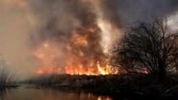 Прокуратура заинтересовалась последствиями мощного пожара вприродном парке «Хасанский»