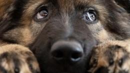 Вквартире петербургской пенсионерки при пожаре погибли 27 собак