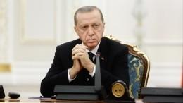 Эрдоган завел аккаунт вTelegram ипоприветствовал фолловеров снимком скотом