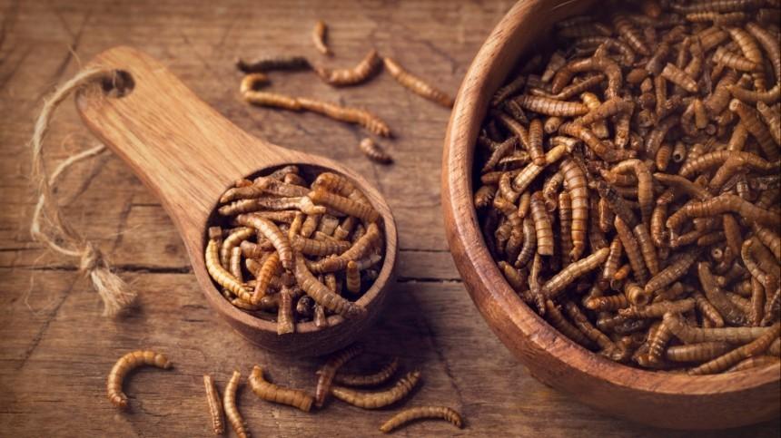 Докатились: власти Евросоюза разрешили употреблять впищу мучных червей