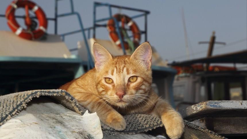 Одесская кошка добралась доИзраиля вгрузовом контейнере, питаясь конфетами
