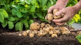 ВРоссии разрешат продажи сельхозтоваров насвоей земле