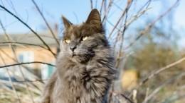 Петербургского кота, сбежавшего вовремя посадки всамолет, нашли спустя полгода