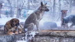 Собаки повышенной опасности: как вУлан-Удэ решили бороться сагрессивными питомцами