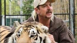 «Король тигров» остался в«клетке»