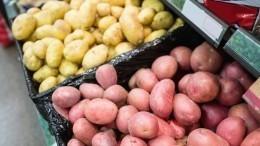 Производители предложили ритейлерам продавать картофель «эконом класса»