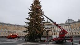ВПетербурге разобрали новогоднюю елку. Что будет слесной красавицей дальше?