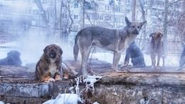 Стая бездомных собак едва неразорвала девятилетнюю жительницу Улан-Удэ