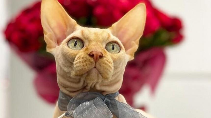 «Себе набей!»— Блогера изУкраины обвинили вживодерстве затату, сделанное коту