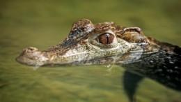 Поселившийся вбассейне крокодил навел ужас нажителей африканского города