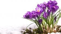 Метеорологи назвали точную дату наступления весны вРоссии