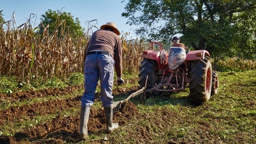Минсельхоз призвал упростить въезд мигрантам для сезонных работ