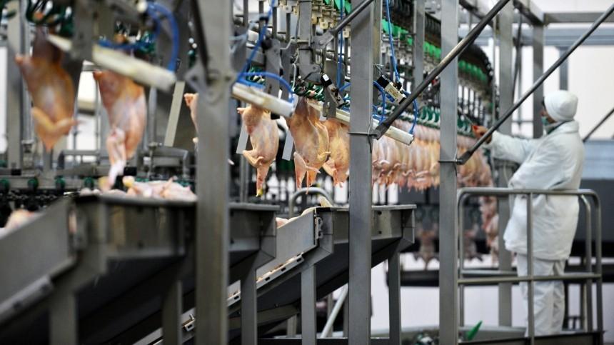Конвейер на птицефабрике зажевал женщину конвейер экономический